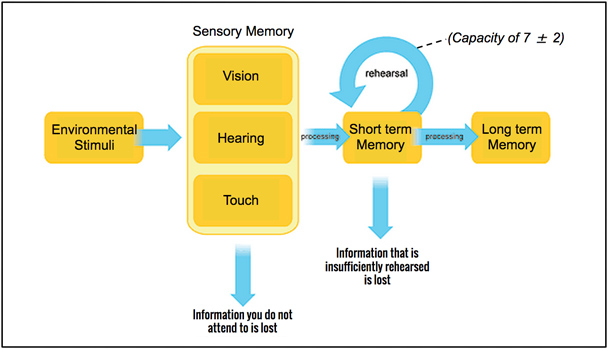 Short Term And Long Term Memory : How human memory works tips for ux designers hiring